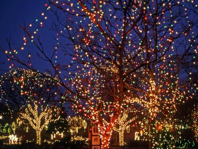 Wildlights at Columbus Zoo and Aquarium
